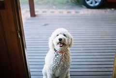 Georgie (julzdream) Tags: dog 35mm pentax spotmatic