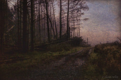Night Trip (shawnraisin d+p) Tags: wood trees tree weather fog mystery night forest woodland dark woods solitude mood forestry magic dream foggy aged distressed mystic coniferous highiso conifer enchanting shawnwhite fujifilmxt10