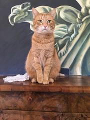 Kater Vulkan (KKS_51) Tags: cat kater littledoglaughedstories