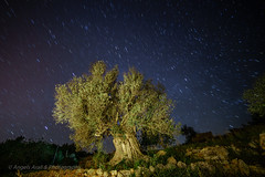 El vigia (ANGELS ARALL) Tags: longexposure tree stars estrellas olivo olivera largaexposicion albol centeneria