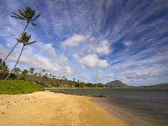 Kawaikui Color (RobertCross1 (off and on)) Tags: ocean trees sea seascape beach water clouds landscape island hawaii sand oahu bluesky olympus pacificocean palmtree tropical hi honolulu hawaiikai omd kokocrater em5 kawaikui 1250mmf3563mzuiko