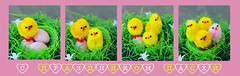 With the holiday Easter (danilina_ekaterina2) Tags: macro canon easter photo chicks 60d