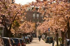 Bieslandstraat - Rotterdam - Liskwartier (Raymond Swaep) Tags: liskwartier