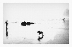 On the Beach (Rick Exstrom) Tags: rickexstrom cannonbeach oregon dog dogs atmosphere painterly expression