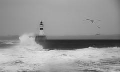 Wild Day (linlaw39) Tags: sea nature birds mono scotland blackwhite waves stormyweather fraserburgh northseacoast sonydschx90