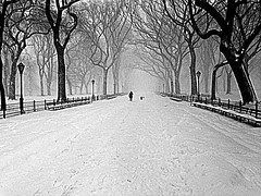 As-we-warm-snowscapes-to-remember--2016-01-23-08.53.41.41 (mbgmbg) Tags: winter bw snow centralpark series snowscape cpw hdrish kw2flickr kwgooglewebalbum takenbymarkgerstein kwpotppt kwphotostream5 blizzard2016 seriessnowscapestoremember