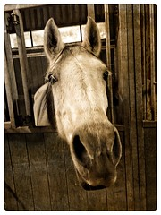 Gezellig Saampjes (gill4kleuren - 11 ml views) Tags: horse white me beauty fun outside happy lol riding gill anisa saar paard pret haflinger hengst arabier