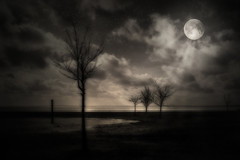in the moonlight session2c (dpiper1102) Tags: bw moonlight