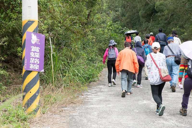 紫蝶幽谷姿沙里沙里步道|高雄茂林