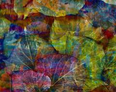 Take up the yoke and plow the fields around (kathrynk2002) Tags: abstract art modern canon graphicdesign abstractart contemporaryart contemporary surrealism digitalart surreal manipulation gratefuldead photograph surrealist textured digitalmanipulation conceptualart layered roberthunter digtalart sureealart