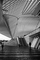 Lines , Lines ...... Guillemins by Calatrava (jo.misere) Tags: bw lines station calatrava liege luik zw guillemins