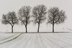 Trees in the Winter (bertrandwaridel) Tags: 2016 echallens january snow trees winter vaud suisse switzerland breathtakinglandscapes