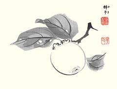 Japanese persimmon (Japanese Flower and Bird Art) Tags: flower art japan japanese book picture persimmon woodblock nihonga kaki kawabata diospyros ebenaceae gyokusho readercollection