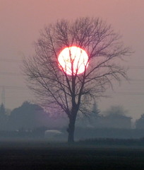 P1000001y (gzammarchi) Tags: italia tramonto haiku natura campagna poesia sole albero paesaggio ravenna pianura borgomontone
