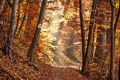 20151106_135758_Romania_7500955.jpg (Reeve Jolliffe) Tags: world nikon romania d750 nikkor 135mm ffl primelens southeasterneurope defocuscontrol fixedfocallength 135dc 13520dc 135mmf20dafdc