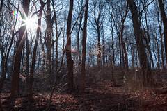 A walk in the woods (kwtracyghostship) Tags: winter light sun woods pittsburgh pennsylvania lensflare 5d burst frickpark 24105l