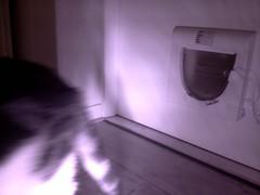 20160207-084456-i-1 (Catflap central) Tags: camera dog pet cats woof cat pi raspberry meow doggie catdoor catflap kattenluik katzenklappe catflapj2nnl taggingasdoguntilautotagginghasanoptout robotaggingisthedevil