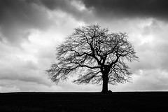 February (Sandy Sharples) Tags: england blackandwhite tree nature monochrome silhouette clouds landscape oak moody
