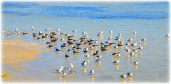 Northshore Park - St Petersburg, Florida (lagergrenjan) Tags: park beach birds st florida north petersburg shore