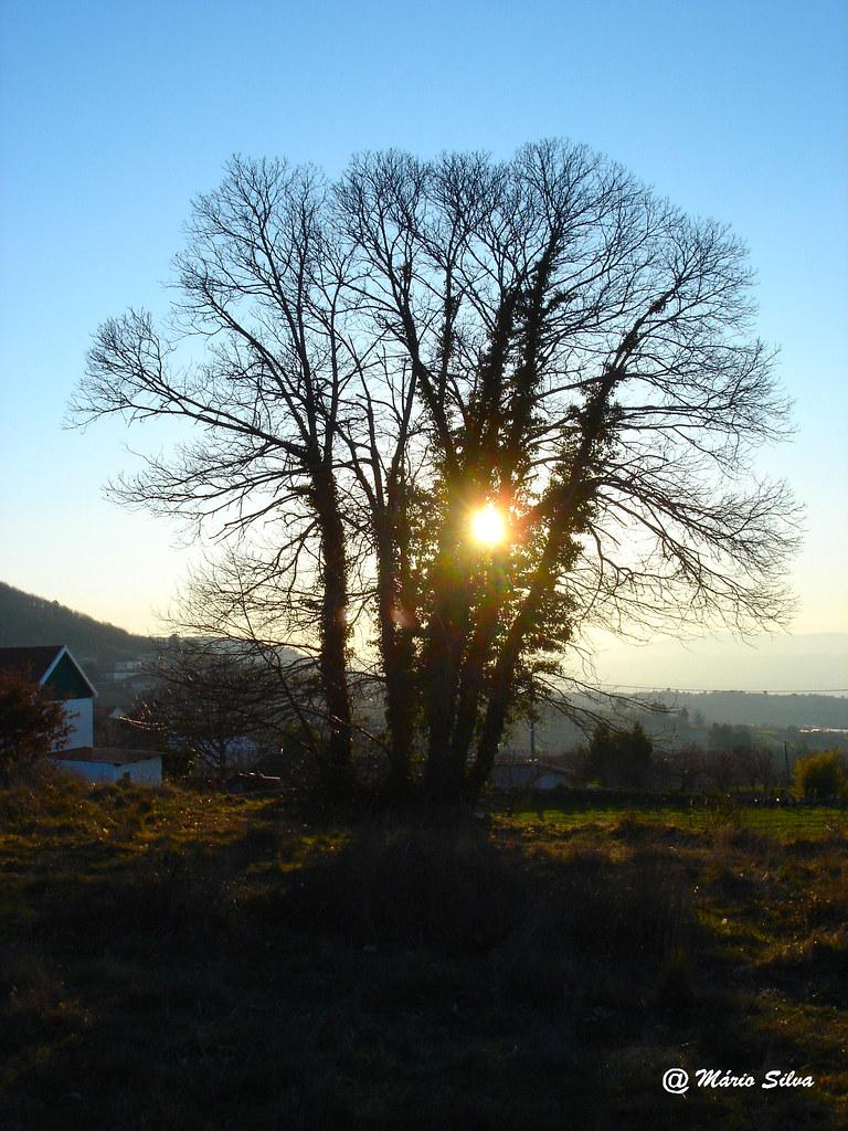 Águas Frias (Chaves) - ... pôr do sol por entre os ramos da árvore ...