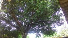 69/366 A refuge (JessicaBelotto) Tags: tree planta nature garden foto ar no natureza paisagem céu days honey jardim click ao fotografia serendipity árvore dias livre ano 366 refúgio 366daysofhoney