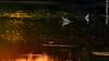 DSC_0449 (RizwanYounas) Tags: pakistan sunset reflection birds pk punjab derawar