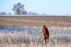 Running fast (kinga.lubawa) Tags: winter dog colors canon pies zima kolory kolorowe canon6d