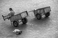 joy and sorrow (zora_schaf) Tags: street people blackandwhite cats platz streetphotography marrakesh schwarzweiss marokko marktplatz djemaaelfna joyandsorrow