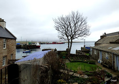 A Glimpse Of Stromness Harbour (orquil) Tags: old uk greatbritain flowers blue sea house tree garden islands march scotland seaside spring nice dock orkney ship tulips harbour yacht small scene calm attractive glimpse leafless quaint solitary stromness outbuilding southpier cargoship berthed orcades coplands 108avictoriastreet islandsenior