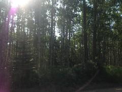 Sulphur Gates PRA (Alberta Parks) Tags: outdoors explore discover enjoy trees sulphurgatespra summer landscape alberta canada forest publicrecreationarea sulphurgates
