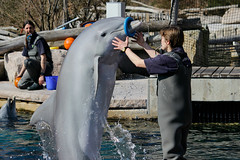 Tiergarten Nrnberg (LisaKristin1501) Tags: lagune canon mammal eos zoo jump marine dolphin nuremberg tierpark delfin dauphin dolphinarium delphinarium delfinarium dolfinarium tiergarten trainer nrnberg delphin 600d delphinlagune delfinlagune
