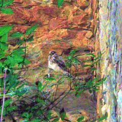 20110611Puxerloch Höhlenburg Vogel (14) (rerednaw_at) Tags: puxerloch höhlenburg vogel steiermark