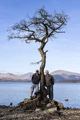Mates (Rossco156433) Tags: tree nature water landscape loch lochlomond milarrochybay thetrossachsnationalparkscotland