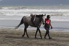 IMG_EOS 7D Mark II201604032335 (David F-I) Tags: horse equestrian horseback horseriding trailriding trailride ctr tehapua watrc wellingtonareatrailridingclub competitivetrailriding sporthorse equestriansport competitivetrailride april2016 tehapua2016 tehapuaapril2016 watrctehapuaapril2016