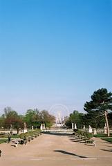 Empty Tuileries (lucapascotto) Tags: paris film 50mm t3 manualfocus analogic filmphotography f17 portra160 manualexposure konicaautoreflex konicahenanon