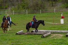 DSCF0342.jpg (Ed Traywick) Tags: horses horse leo robyn obstacles horseclinic