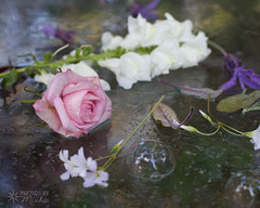 Bubbles and Flowers (Photos By Michi) Tags: pink stilllife white flower floral rose spring flora purple blossom lavender sage bloom snapdragon
