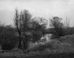 Vistula Landscape Park, early spring 2016 (Other dreams) Tags: park landscape spring pentax 6x7 vistula 75mm
