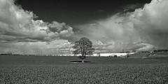 """Stuck in the middle with you"" (AndyorDij) Tags: uk trees england blackandwhite bw storm tree monochrome field rain landscape mono spring unitedkingdom fields rutland 2015 empingham highfieldsfarm"