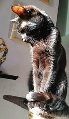 Leeloo. (julzz2) Tags: cats pets animal animals mycats felines cutecats blackcats pussycats animalfaces catlovers catfaces catsfaces sunnycats felinefaces petsfaces blackcatsfaces