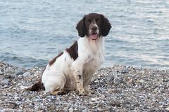 P1630329.jpg (Flemming Andersen) Tags: dogs water denmark spring outdoor hund dk hurup thistedmunicipality hurupthy helligsvej hebojebi