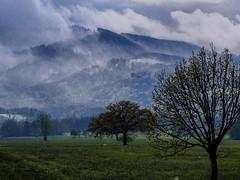 Im Schneegestber unterwegs (novofotoo) Tags: bayern deutschland natur moor wetter alpenvorland sterntalerfilze badfeiilnbach