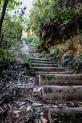 DSCF4607 (M.D.Rozen) Tags: nature bush hiking sydney australia fujifilm cascade bushwalk katoomba leura x100t