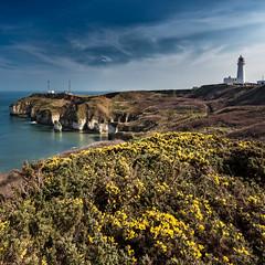 Flamborough Head Lighthouse (roseysnapper) Tags: sea sky cloud lighthouse water landscape chalk spring outdoor cliffs circularpolarizer gorse flamborough flamboroughhead leefilters nikond810 nikkor1424f28