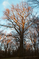 (pop archaeologist) Tags: park city nyc trees light sunset shadow newyork film vertical brooklyn canon kodak prospectpark barebranches 28105 ultramax400 eoaseoselan7