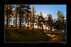 Forest Glow_4789 (The Terry Eve Archive) Tags: trees backlight forest canon scotland glow aberdeenshire firs goldenglow rimlight eos5d