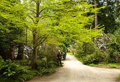 Milner Gardens Scene (Gus Thompson) Tags: plants scene vancouverisland
