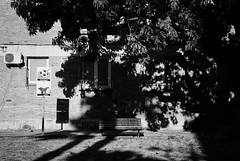 A l'ombra (Dani Rubio :)) Tags: street urban bw arbol chair banco bn rincones urbana banc reus racó racons