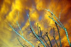 siccitas_608 (nograz) Tags: cloud d50 secco caldo nograz