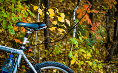 Autumn Forest. Some bike. (Lihoman...) Tags: wood autumn light red tree green leaves bike bicycle wheel yellow forest canon silver giant landscape eos 50mm bokeh branches ii acer stems vehicle birch f18 boke bushes ef canonef50mmf18ii 550d boulderse canoneos550d lihoman